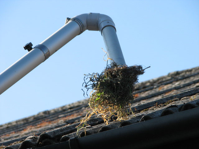 Gutter Clearance Amp Unblocking In Cornwall